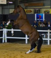 STOCK - 2014 Total Equine Expo-15 by fillyrox