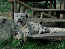 Snow leopard 2 by Loupiotte1203