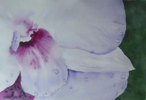Orchid by DebIPass