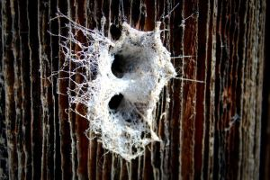 Spiders home by puddingtown