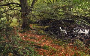 Brockagh Water in autumn by younghappy