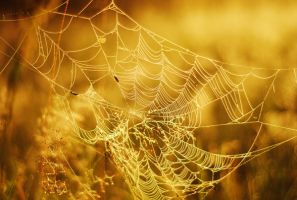 spider web by maaaxxxi