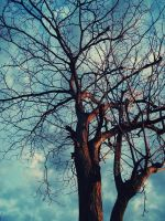 branches_2 by noohohIcant
