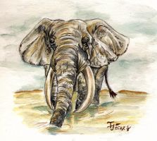 Elephant - watercolor sketch by I-A-Grafix