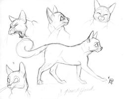 Cat Sketches by WesternSpice