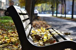 Bench in autumn by gozzibarbara