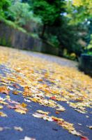 Fall by aaid