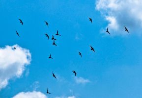 Sky+birds by Quinnphotostock