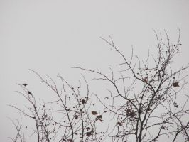 branches by yourpoisontheo