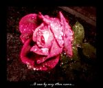 ..A rose by any other name.. by xdeadxchinaxdollx