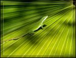 Fade to Green by GeodeLady