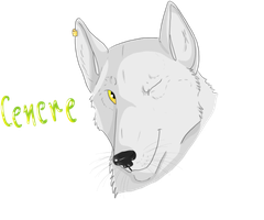 White Wolf by Saphiry