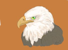 Eagle - Drawing by Pegarissimo