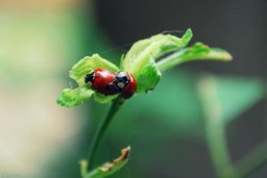 ladybugs are making baby by BabyBirdskt