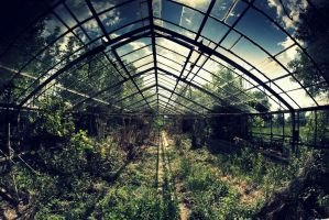abandoned glasshouse I by WilhelmBielawa