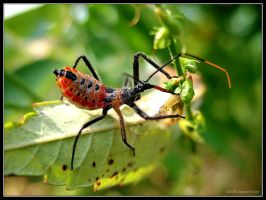 The Wheel Bug's Lunch by DwayneF