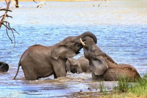 Elephants playing in the water by LS-Coloringlife