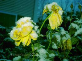 yellow rose in snow by aznbabii0712