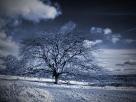 Tree Wimpole Hall Estate by davepphotographer
