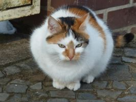 Multicoloured moggie 4 by teetotally
