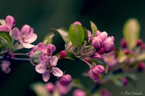 Spring blossom. by Phototubby