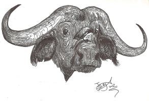 Cape Buffalo by HodariNundu