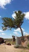 The Tree From the Rock by Bigbenhoward