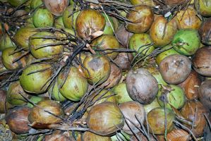 Coconuts, Thailand by dpt56