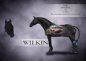 WILKIN by Abrecombie