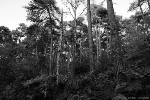 Lickey Hills by lori80
