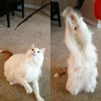 Cat vs. Feather... by Artemis015
