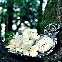 Time has passed by EliseEnchanted