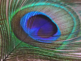 Peacock Feathers 9 by ArcadianSpaceship
