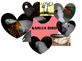 KAHLUA BIRD My pet cockatoo by Aqws7