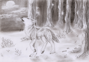Wolf in forest by Liraelwolf
