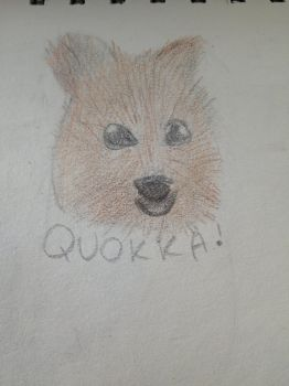 Sketchdaily #43: quokka by enderqueen