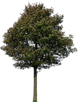 tree 45 png by gd08