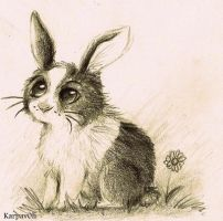 Rabbit by karpfinchen