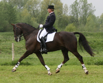 Dressage stock 13 by ByMelody
