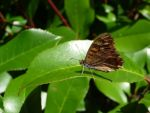 butterfly by abelgalois