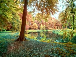 IRV - Forest pond by MaxArceus