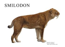 Smilodon manip by pookyns-5