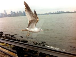 Seagulls of Staten Island by DigitallyDestined