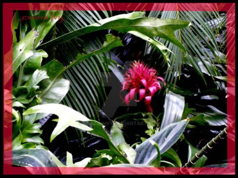 Aechmea explore aechmea on deviantart for Aechmea fasciata