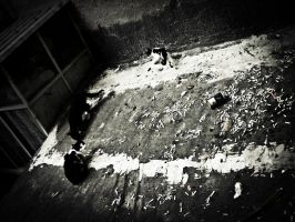 cats, dirt and cigarette by Gundhardt
