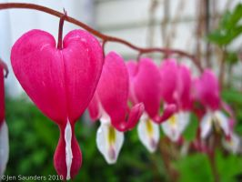 Your Bleeding Heart by Pixiemisa