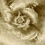 A Golden Flower, She Said by ersi