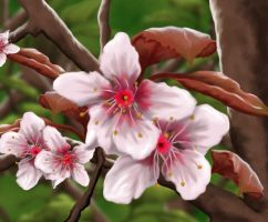 Cherry Blossom Painting by Trish2