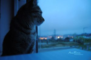 Watching As The City Wakes by AnaRosaPhotography