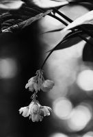 Untitled by Placi1
